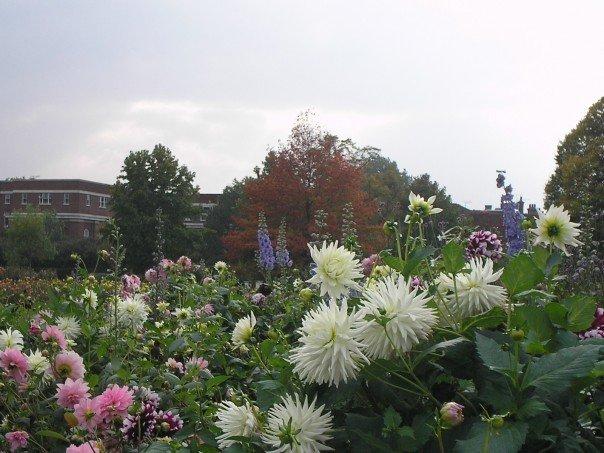 Flowers Regent Park