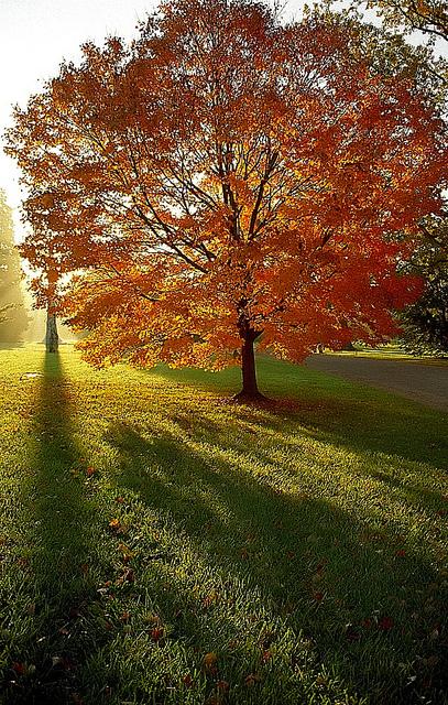 "Cincinnati - Spring Grove Cemetery & Arboretum ""Autumn Tree & Obelisk - Backlit"""