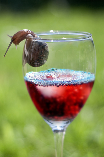 snail & wine | shell-ebrations ? - explored